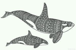 подводный мир раскраски (53)