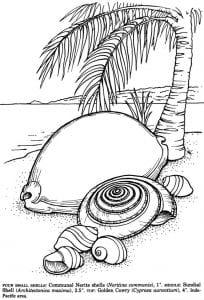 подводный мир раскраски (99)