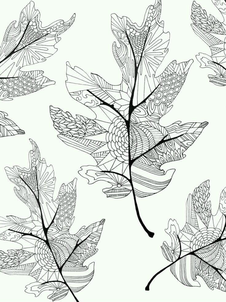 -листья-и-деревья-33 раскраски листья и деревья (33)