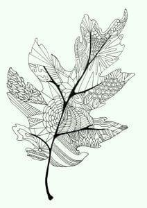 раскраски листья и деревья (34)