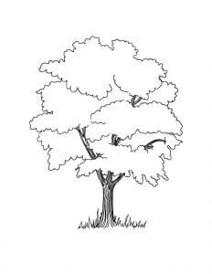 раскраски листья и деревья (49)