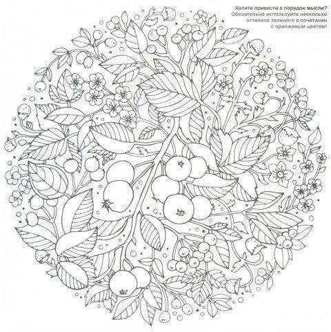 -раскраски-13 фрукты раскраски (13)