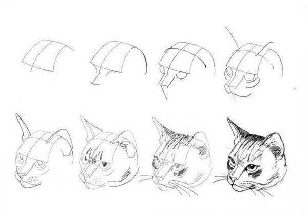 как нарисовать морду кошки