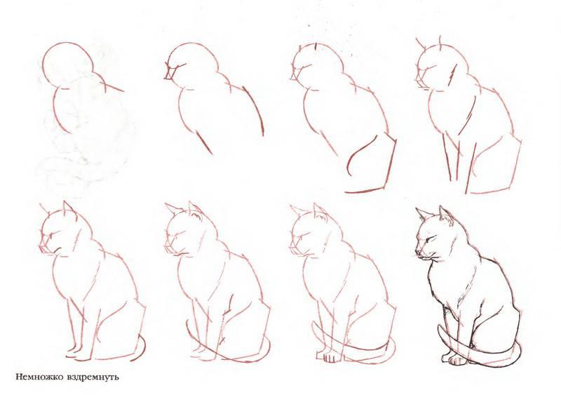 как нарисовать спящую кошку