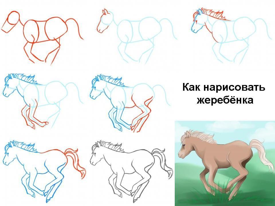 Как нарисовать жеребенка