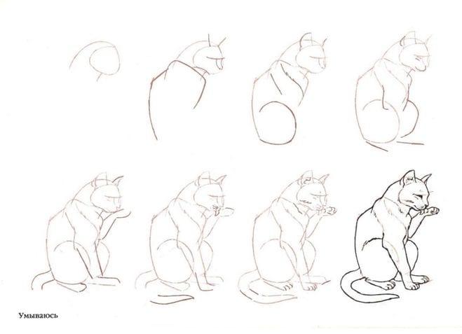 как нарисовать умывающуюся кошку
