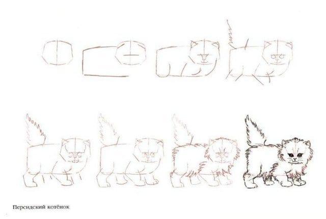 как нарисовать персидскую кошку
