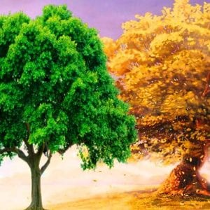 Деревья и листья раскраски
