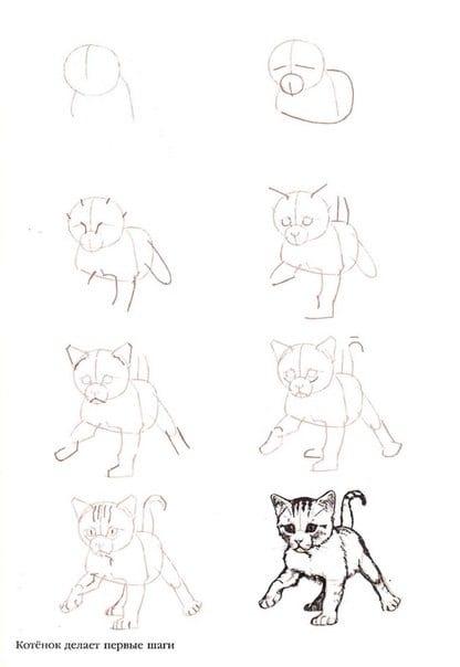 как нарисовать новорожденного котенка