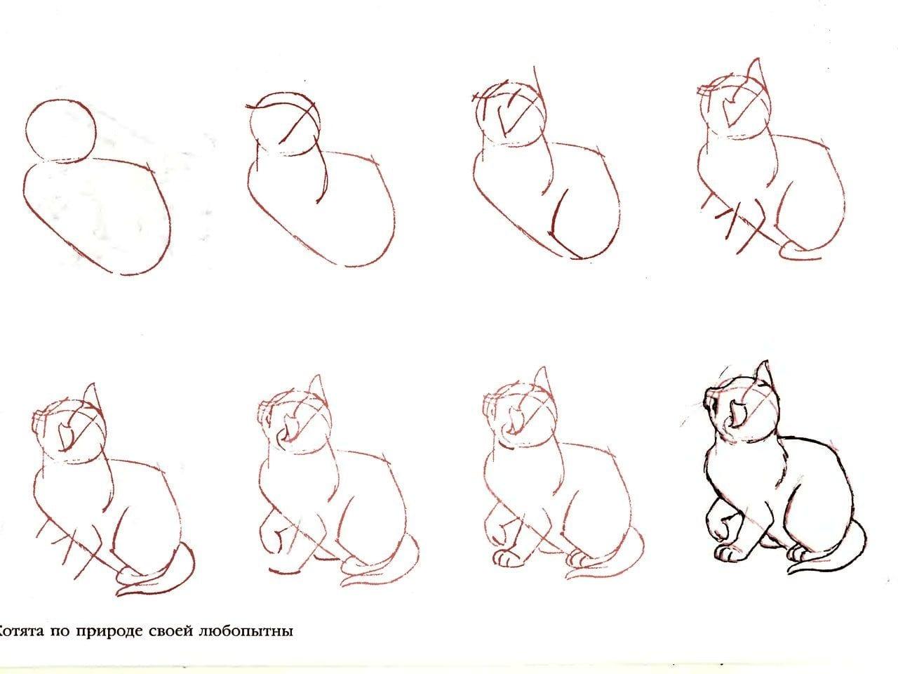 как нарисовать домашнего котенка
