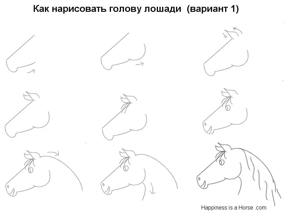 Как нарисовать голову лошади