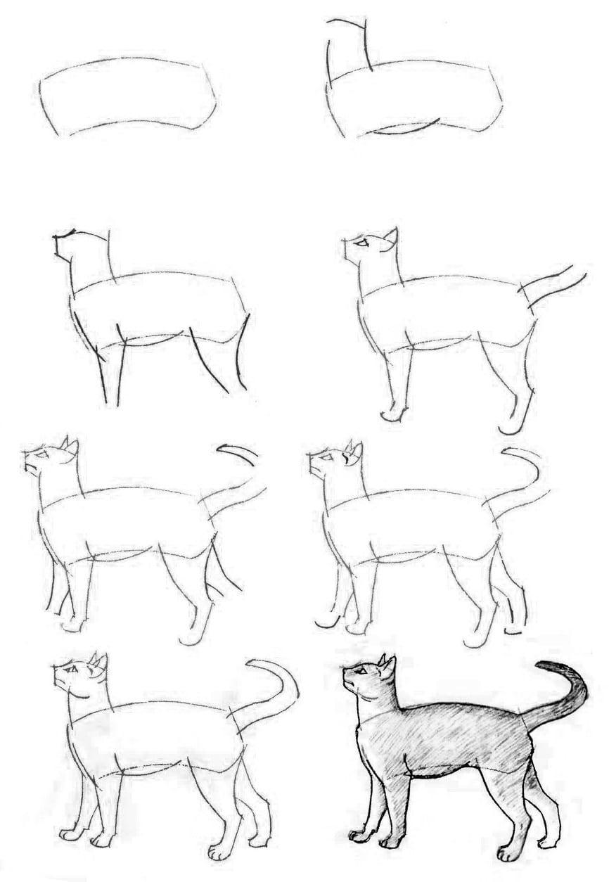 как нарисовать кошку голодную