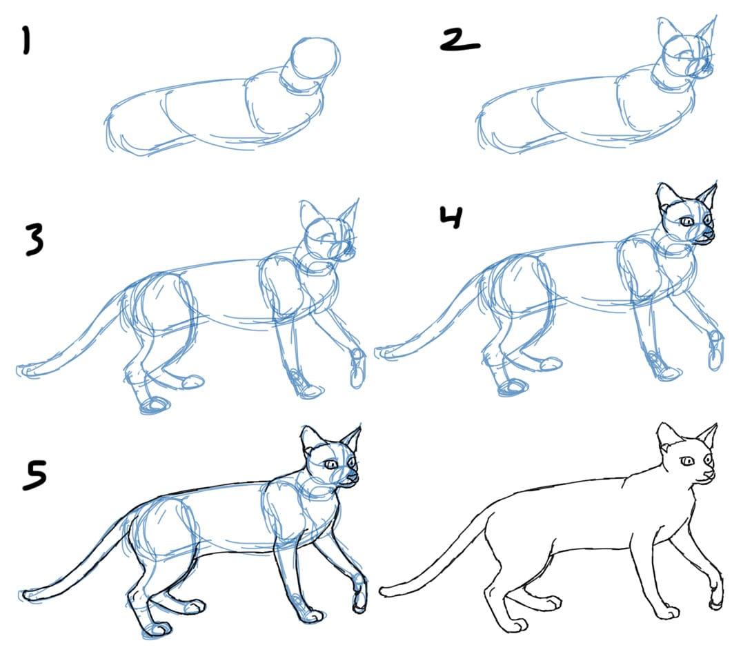 как нарисовать кошку в движении