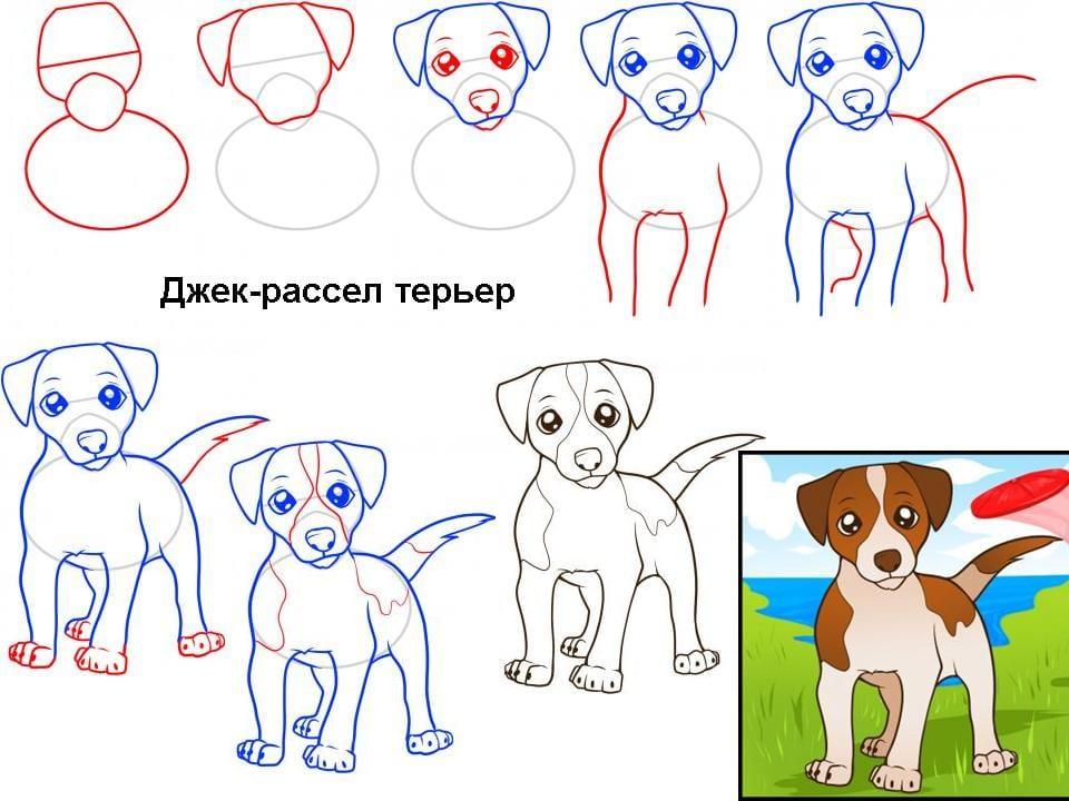 kak-narisovat-jack-rassel1 Как нарисовать собаку