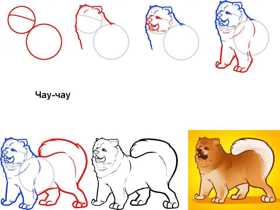 как нарисовать чау-чау