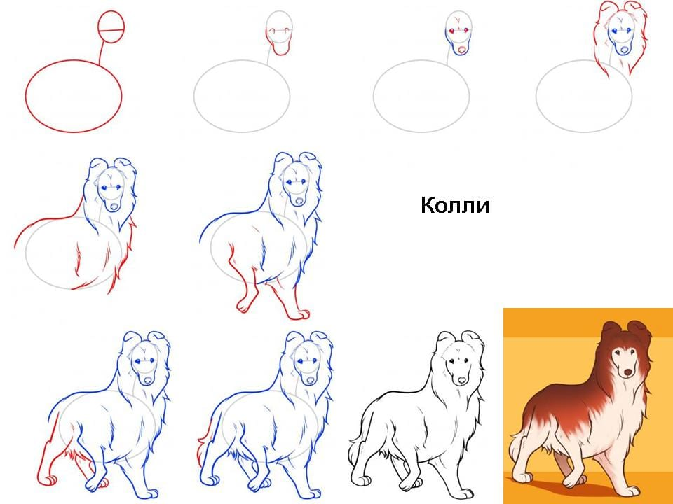 kak-narisovat-sobaku-kolli Как нарисовать собаку