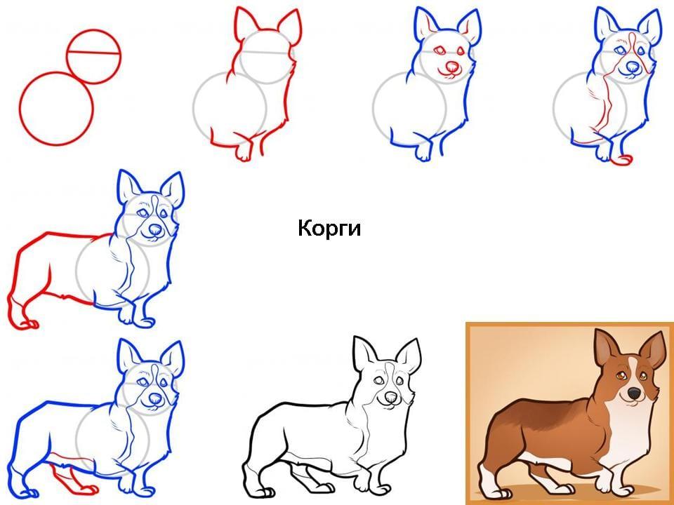 kak-narisovat-sobaku-korgi Как нарисовать собаку