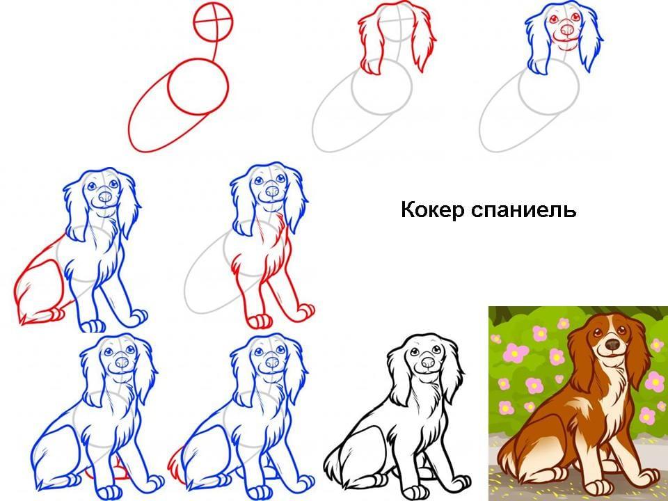 kak-narisovat-sobaku-spaniel Как нарисовать собаку