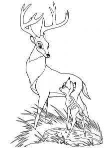 Раскраска Бэмби и отец