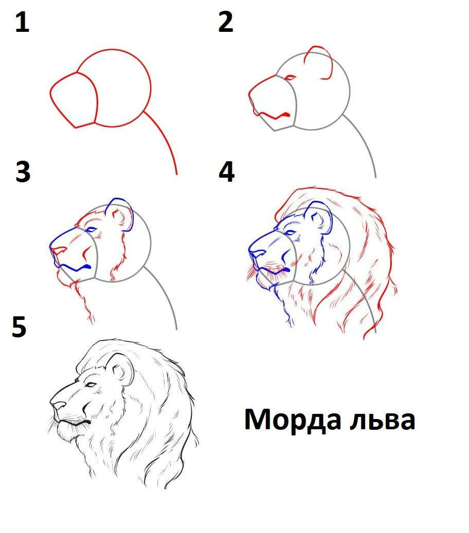 как нарисовать морду льва