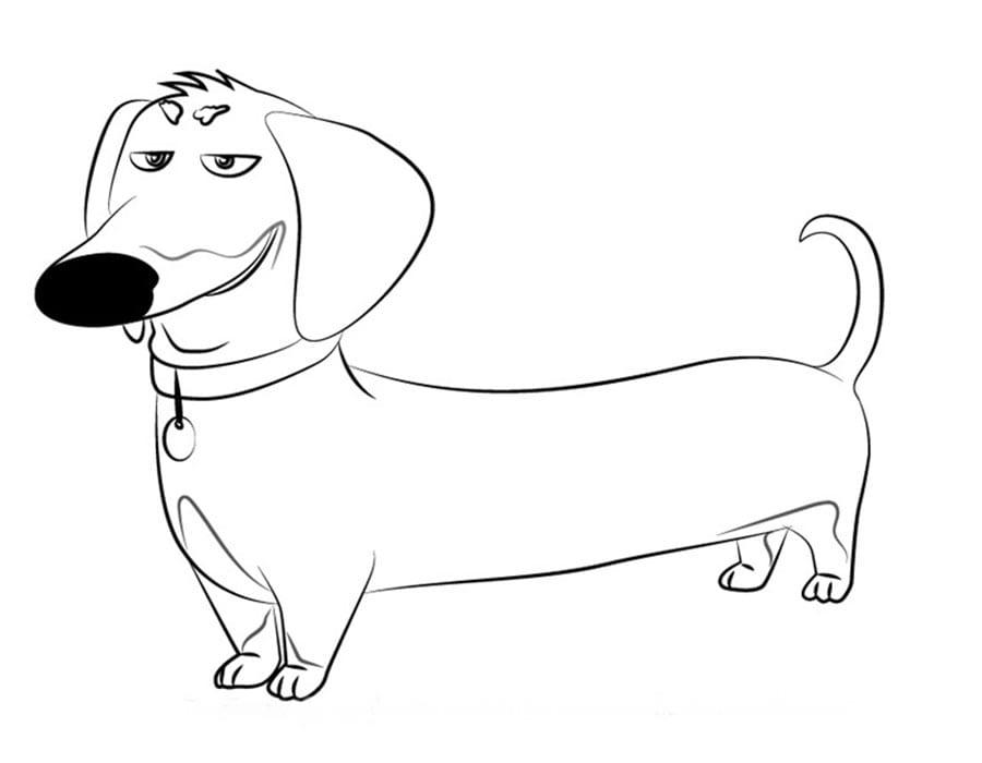 Тайная жизнь домашних животных раскраска (10)