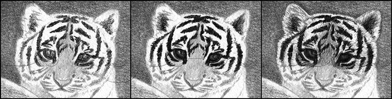 10 Как нарисовать тигренка поэтапно