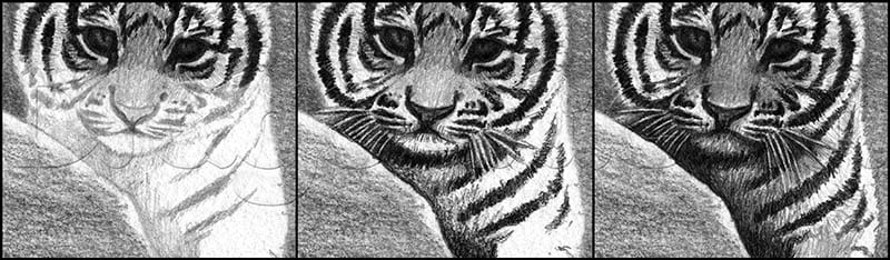 11 Как нарисовать тигренка поэтапно
