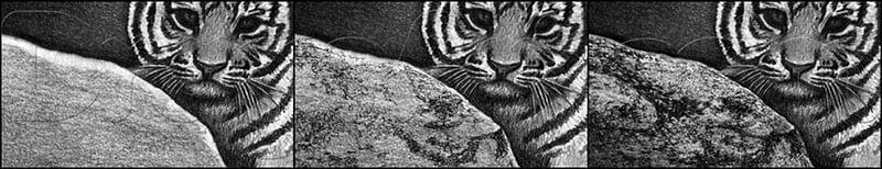 14 Как нарисовать тигренка поэтапно