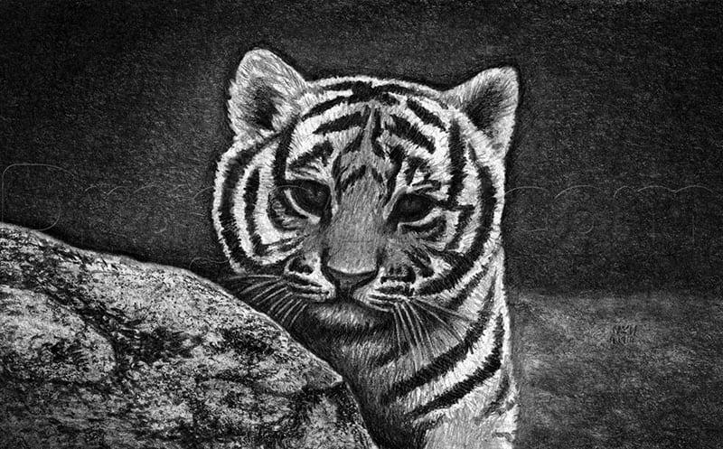 15 Как нарисовать тигренка поэтапно