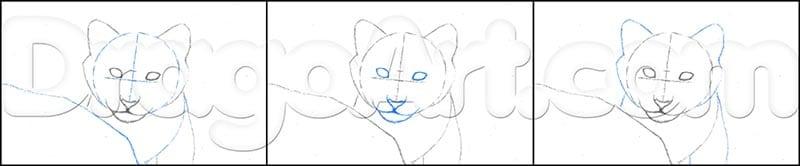 2 Как нарисовать тигренка поэтапно