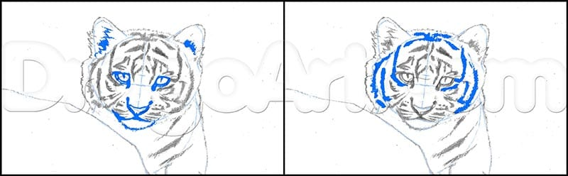 4 Как нарисовать тигренка поэтапно