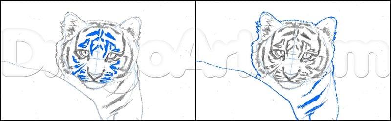 5 Как нарисовать тигренка поэтапно