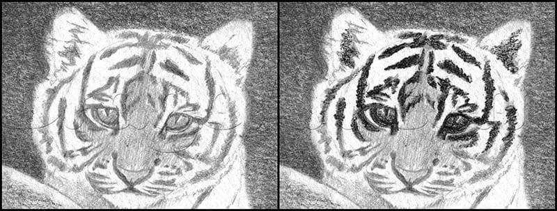 9 Как нарисовать тигренка поэтапно