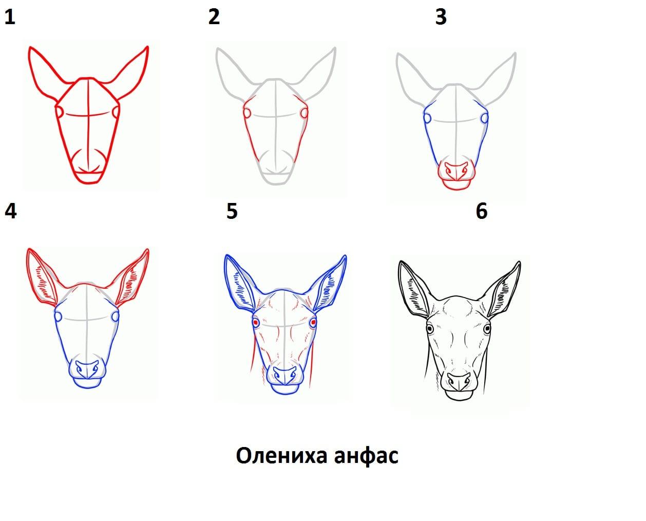 -анфас Как нарисовать оленя поэтапно