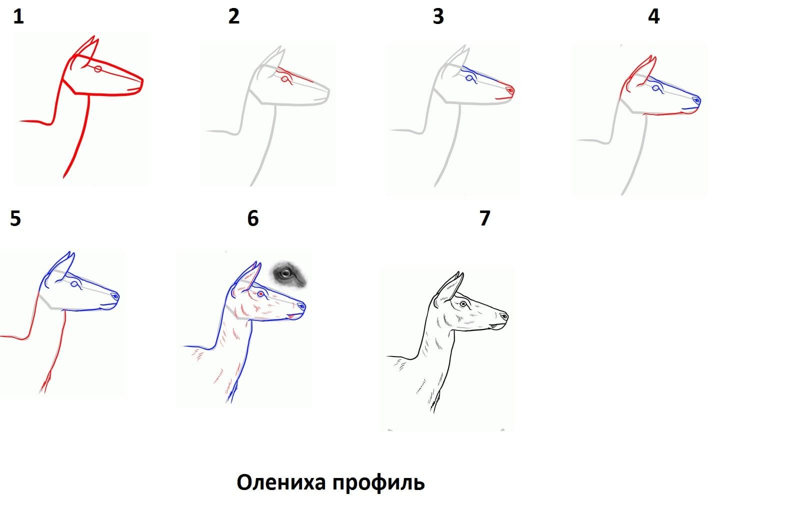 -профиль Как нарисовать оленя поэтапно