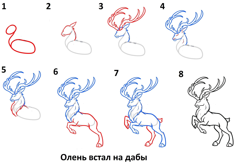-встал-на-дыбы Как нарисовать оленя поэтапно