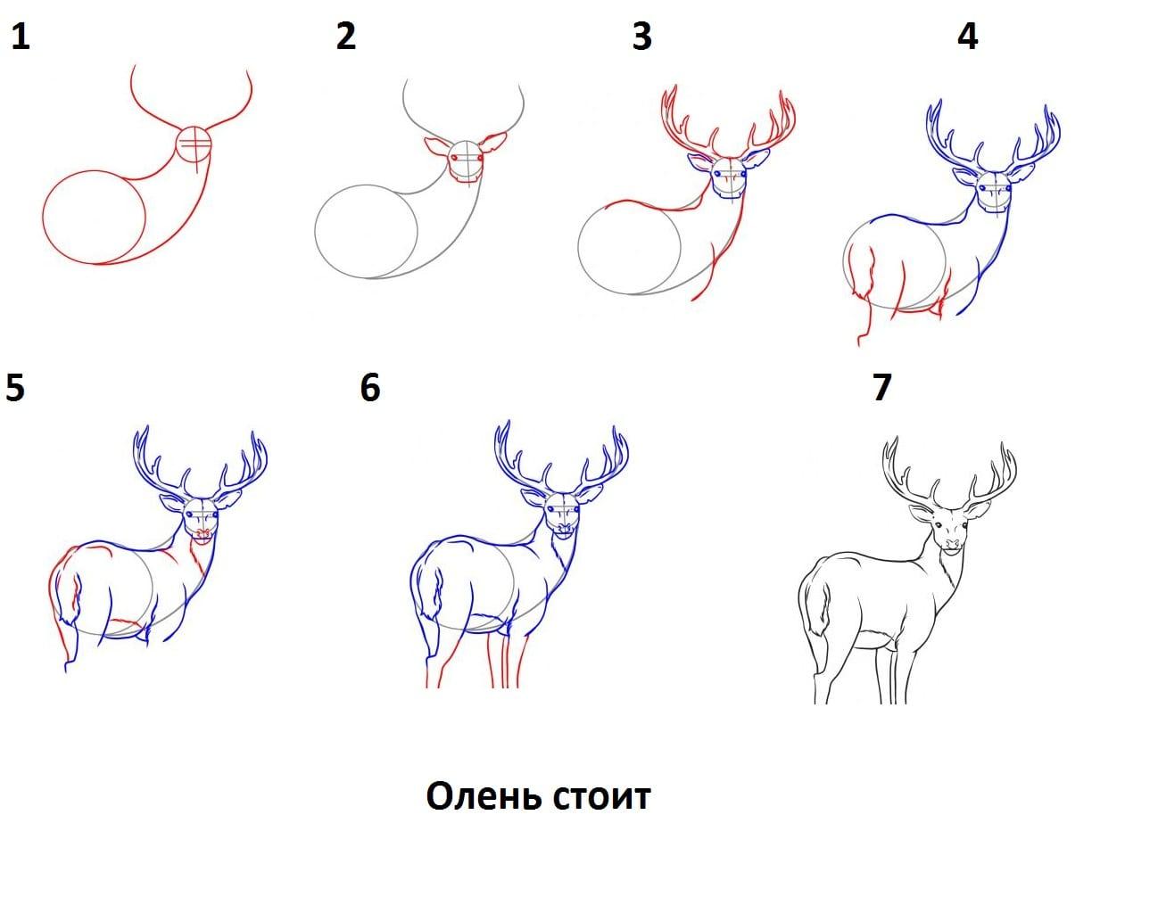 -стоит Как нарисовать оленя поэтапно