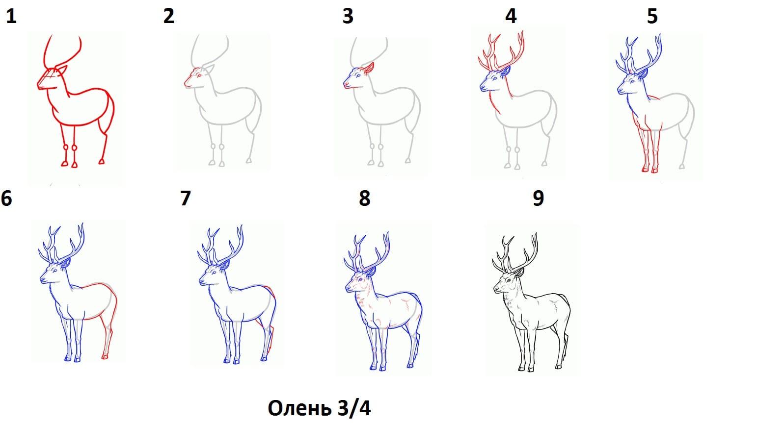 -3 Как нарисовать оленя поэтапно