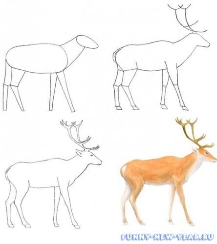 4TA4ZUlrUJQ Как нарисовать оленя поэтапно
