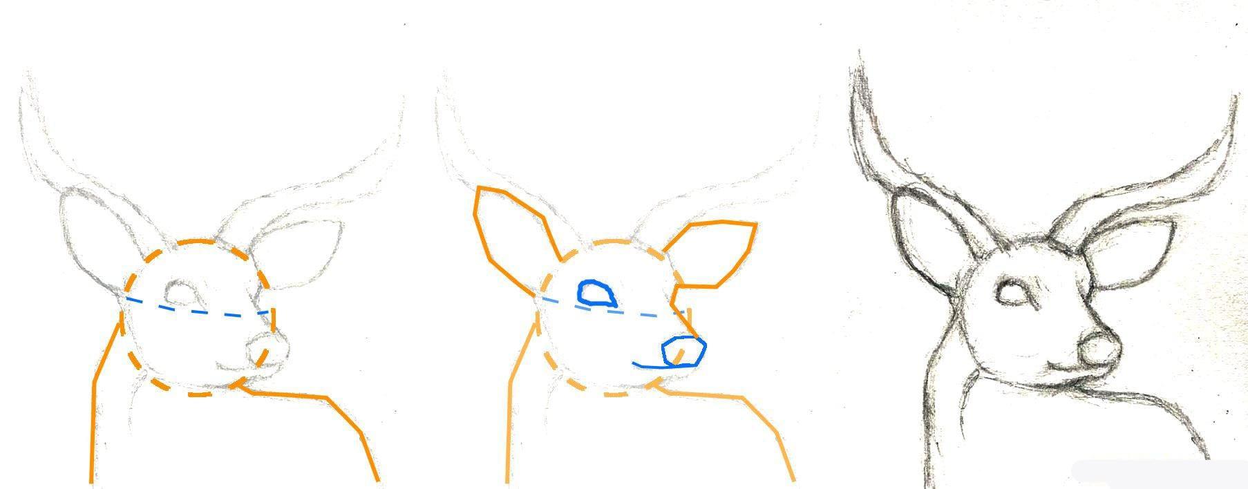 how-to-draw-a-deer-head-buck-dear-head-step-2_1_000000065853_5 Как нарисовать оленя поэтапно