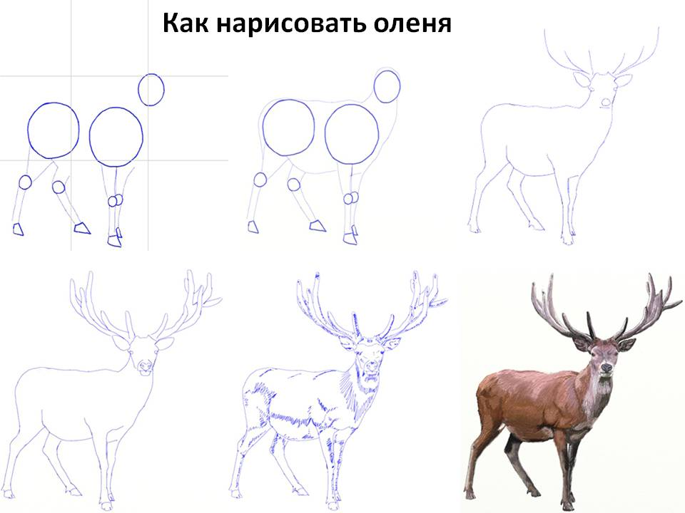 kak-narisovat-olenya Как нарисовать оленя поэтапно