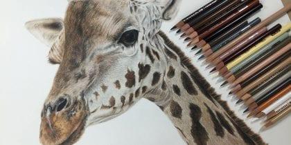 как нарисовать жирафа поэтапно