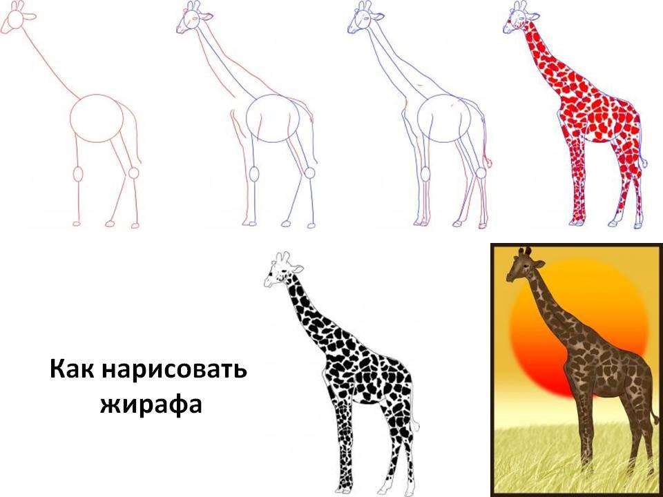 как нарисовать большого жирафа