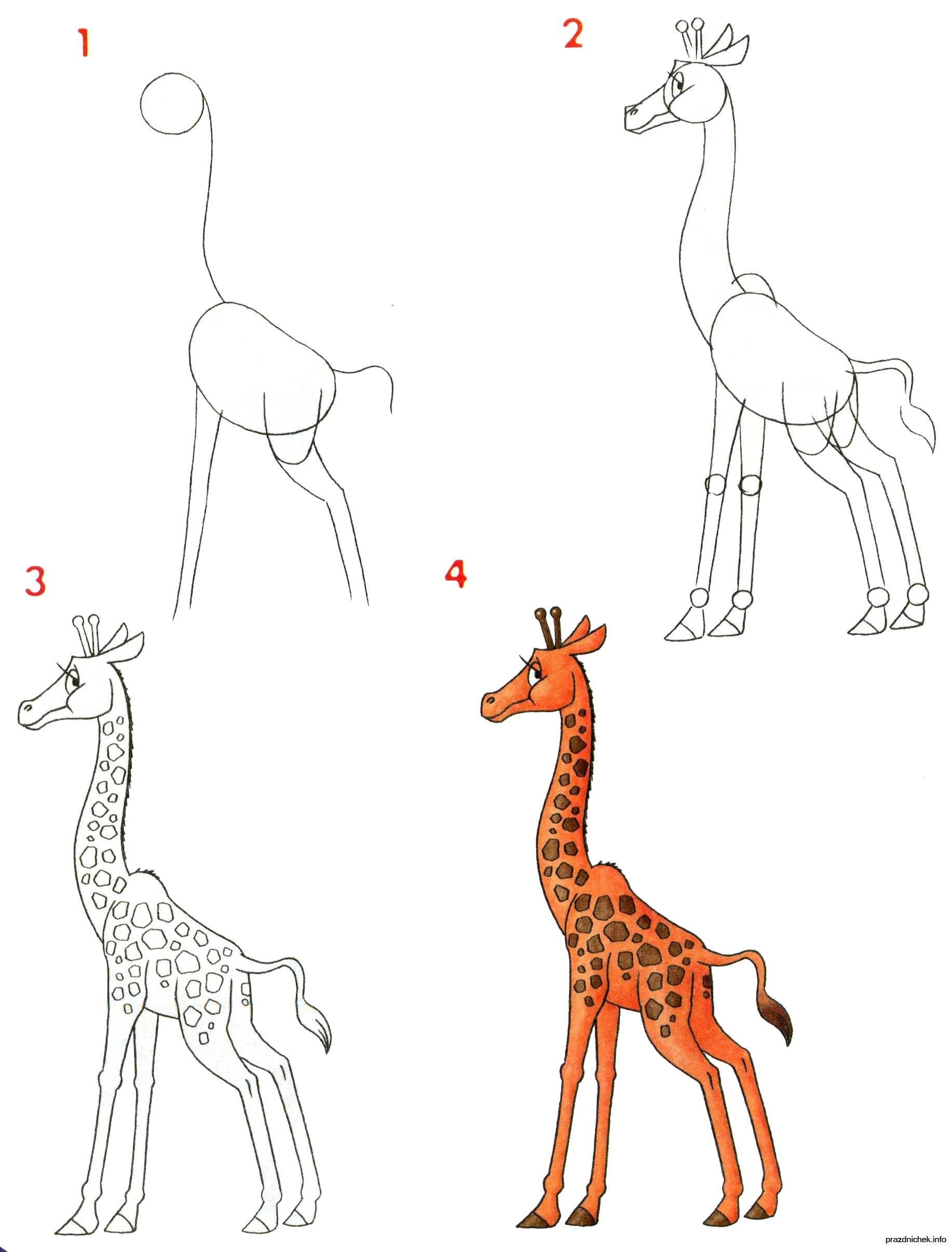 -нарисовать-жирафа-для-начинающих Как нарисовать жирафа поэтапно