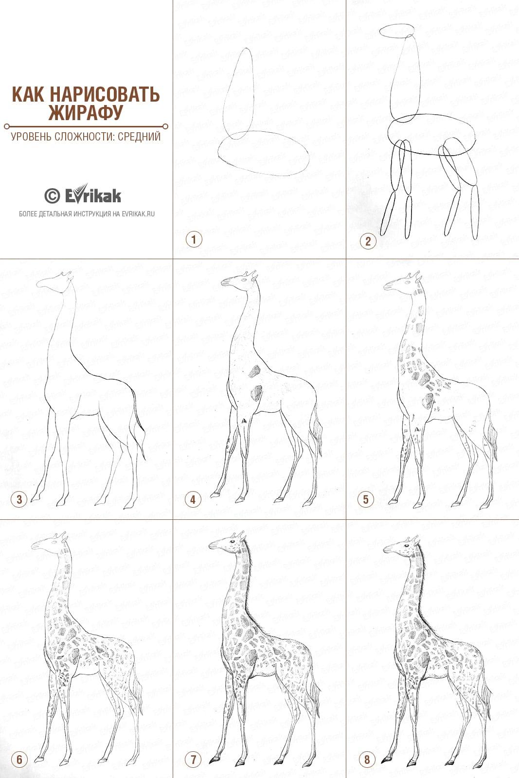 -нарисовать-жирафа-карандашом-поэтапно Как нарисовать жирафа поэтапно