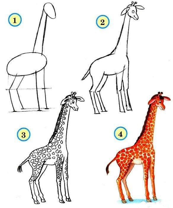 как нарисовать жирафа карандашом