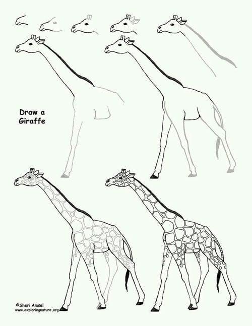 как просто нарисовать жирафа