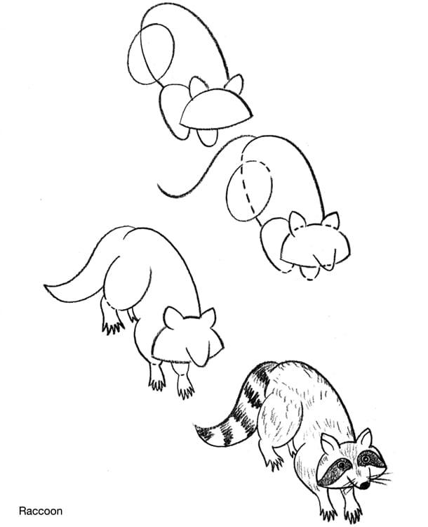 Рисунки енота поэтапно
