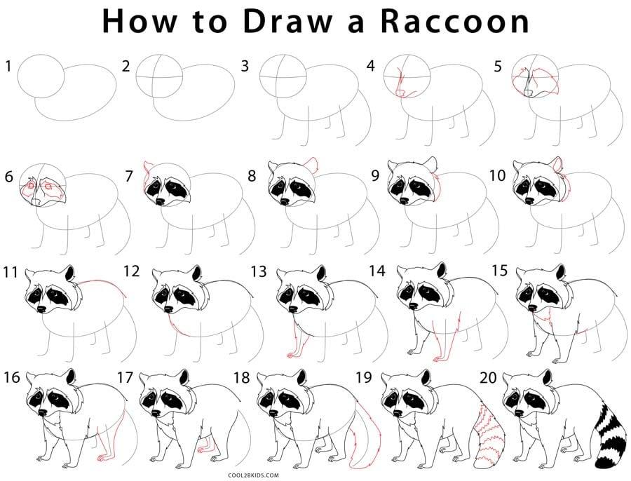 -нарисовать-енота-карандашом-поэтапно Как нарисовать енота