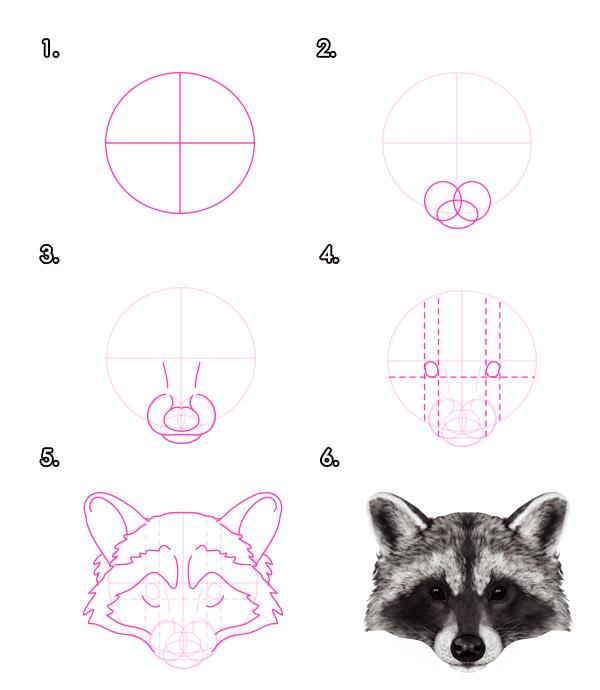 -нарисовать-енота-карандашом Как нарисовать енота